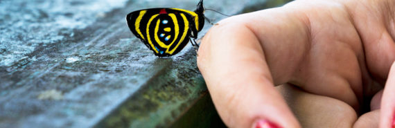Mato Grosso butterfly