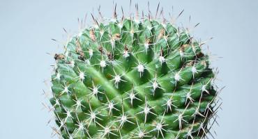 prickly plant