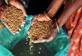 hands pour rice into bag