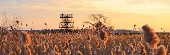 salt marsh in Plum Island