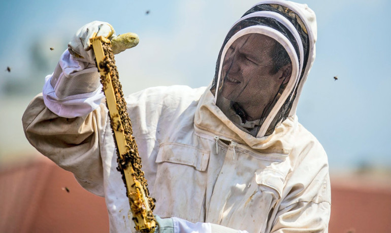 biologist Berry Brosi tends his research hive