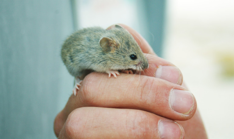 man holding a tiny mouse