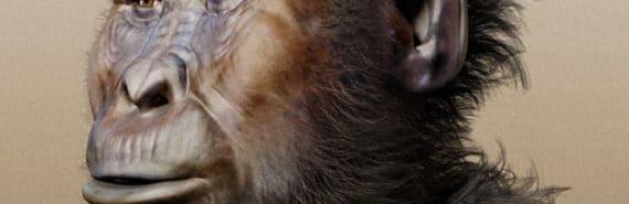 facial reconstruction of Paranthropus boisei