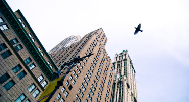 city bird flying