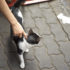 hand touches a cat