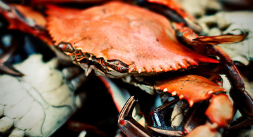 crab shells