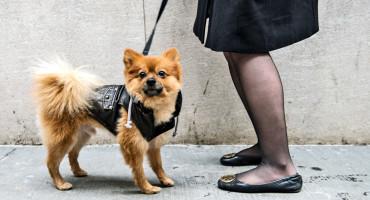 woman walks dog in jacket