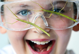 girl in safety glasses with stick insects on the lenses