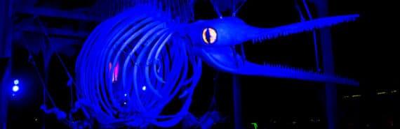 blue ichthyosaur model