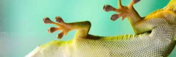 gecko feet