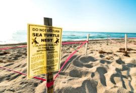 sea turtle sign on beach