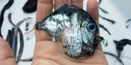 Deep-sea Hatchetfish