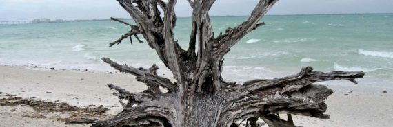 tree roots on beach