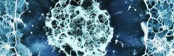 human stem cell