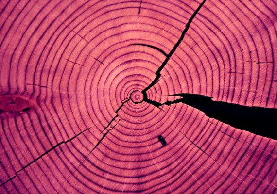 tree rings in pink
