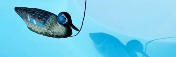 decoy duck in pool