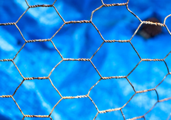 chicken wire on blue