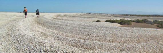 dead clams in colorado river bed