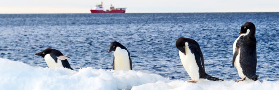 Royal Navy ship and penguins in Antarctica