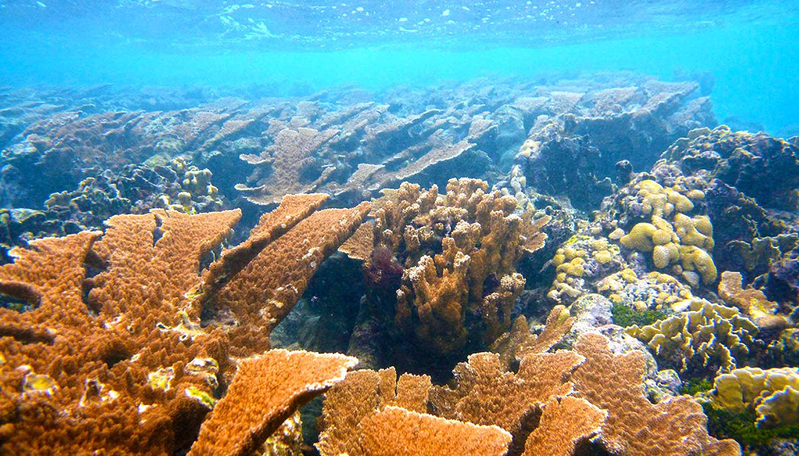 5,000-year-old corals are now threatened