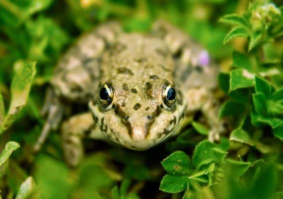 frog in green leaves