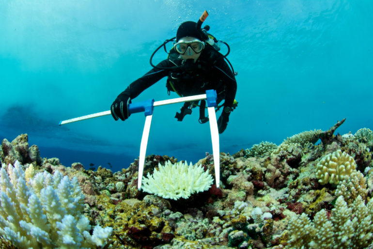 scientist measures coral