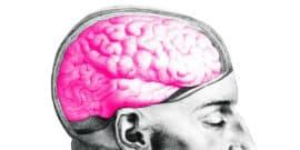 pink brain in head