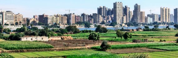 crops outside Cairo, Egypt