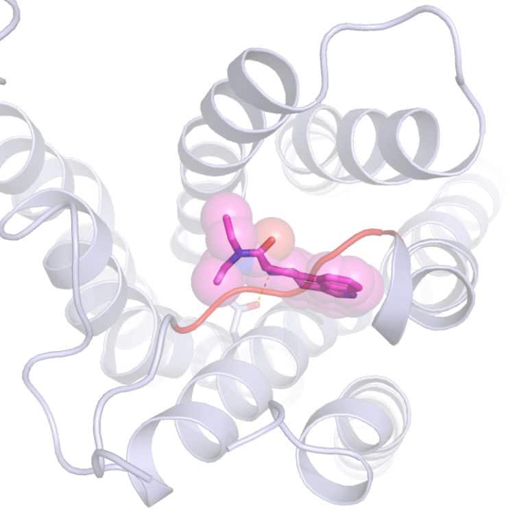 LSD and serotonin receptor