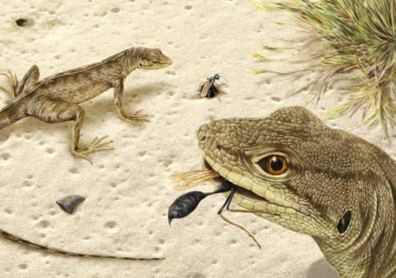 Magnuviator ovimonsensis illo