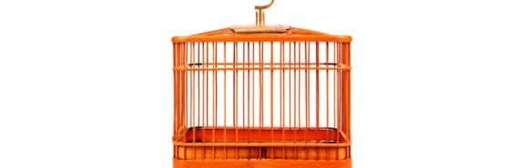 orange cage on white