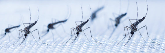 mosquitoes on fabric