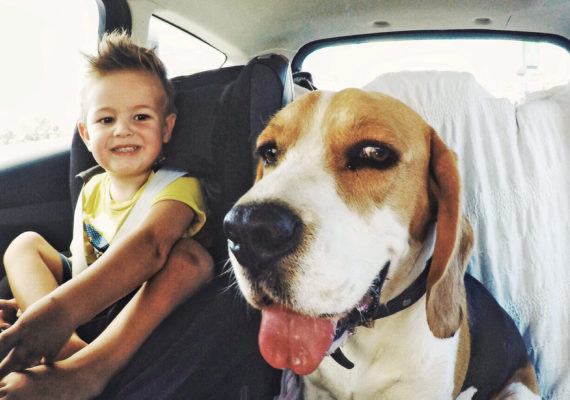 toy and dog in backseat of car