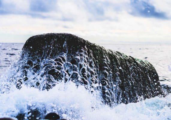 ocean water over rock