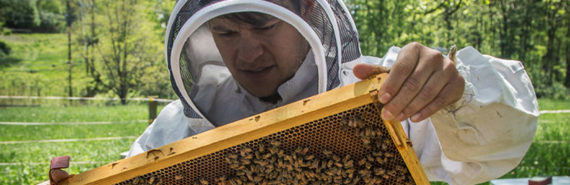 man holds honey bees on comb