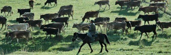 nomadic herder in Kazakhstan