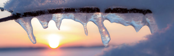 icicles hang off a branch at sunset