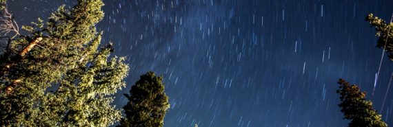 long exposure of stars and trees