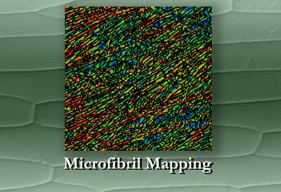 microfibril mapping illustration