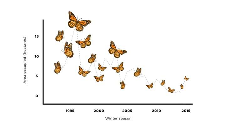 chart showing the monarch butterflies' decline
