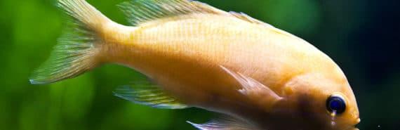 orange fish on dark green background