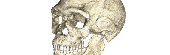 Homo sapiens skull on white