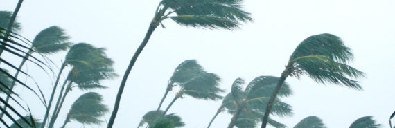 palm trees sway in a storm