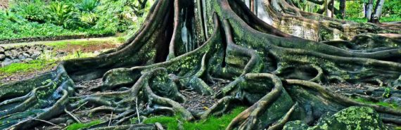 twisting tree roots in green setting