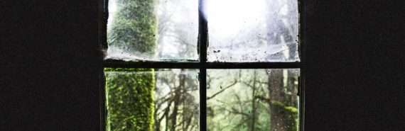 mossy tree through old window