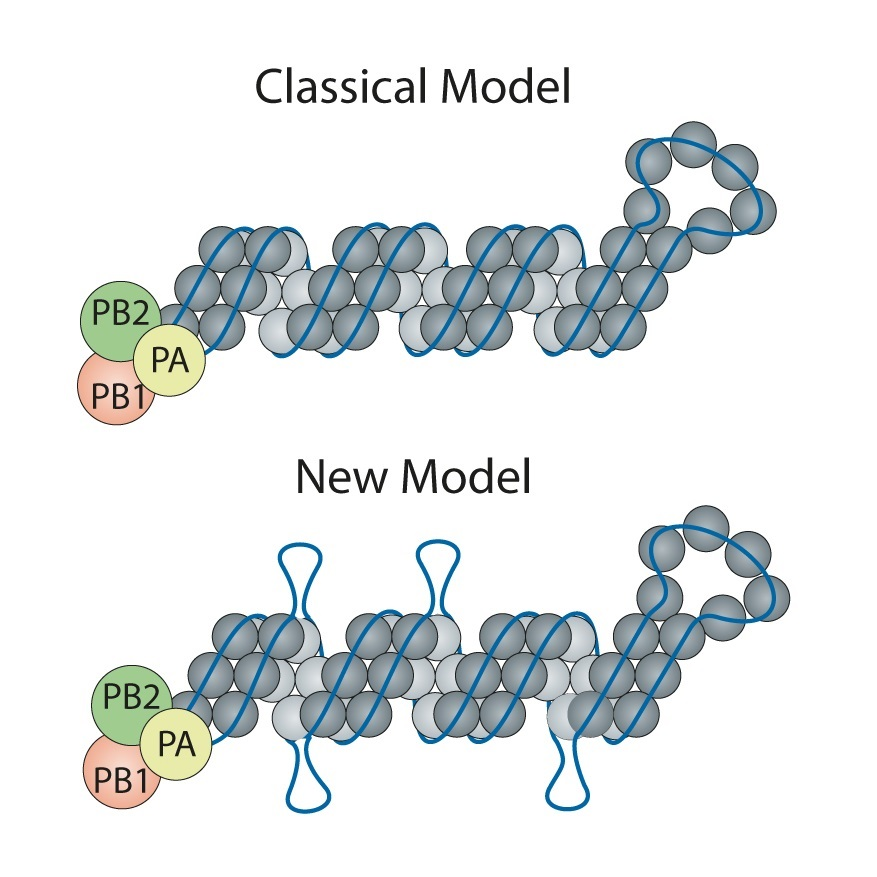 classic and new flu models