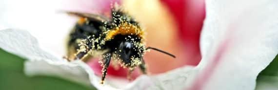 bee wears pollen from flower