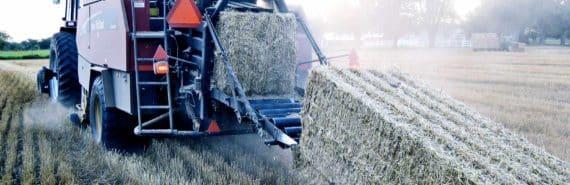 baler harvesting wheat for biofuel