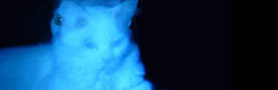 double exposure blue cat on black