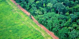 aerial shot of deforestation for agriculture
